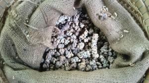 Civets poop ;-) and new coffee