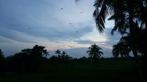 Herons coming
