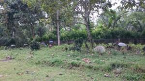 Local cementery