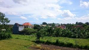 Cau Chocolate farm